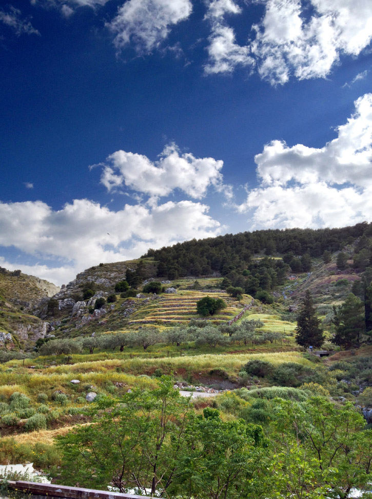 A flowering hillside on Hydra
