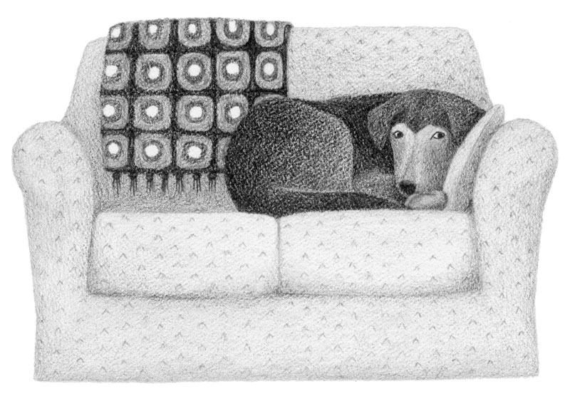 dog-on-couch-drawing